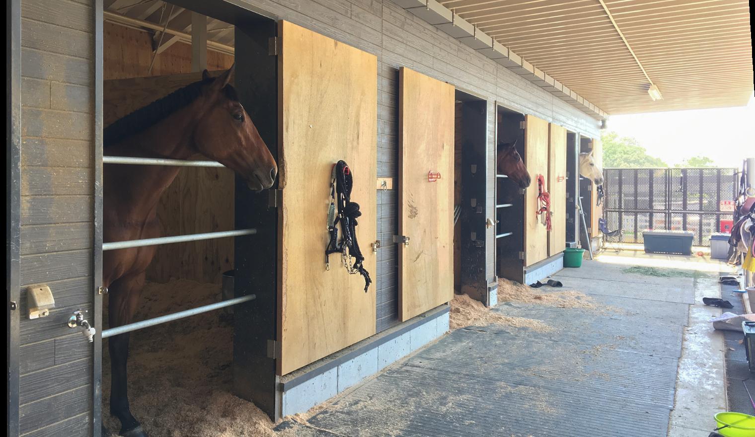 馬たちの厩舎